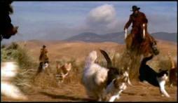 140305 (1) Herding Cats