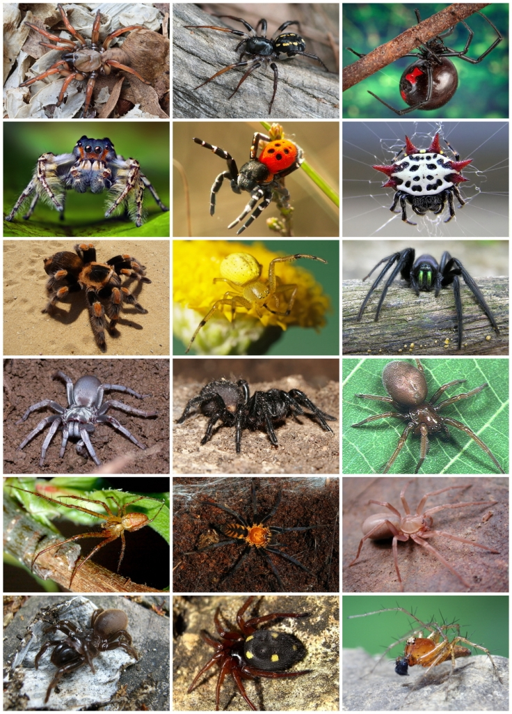 Even spider variety is good...(or interesting, at least!)