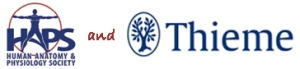 As part of a larger partnership that includes 30% off all Thieme products for HAPS members and students, the HAPS leadership is proud to announce a new award to recognize and reward excellence in undergraduate A&P instruction.