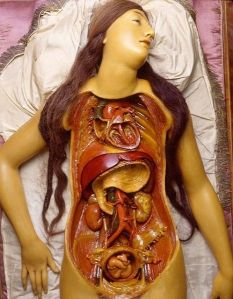 Anatomical Wax of a female from La Specola in Italy.