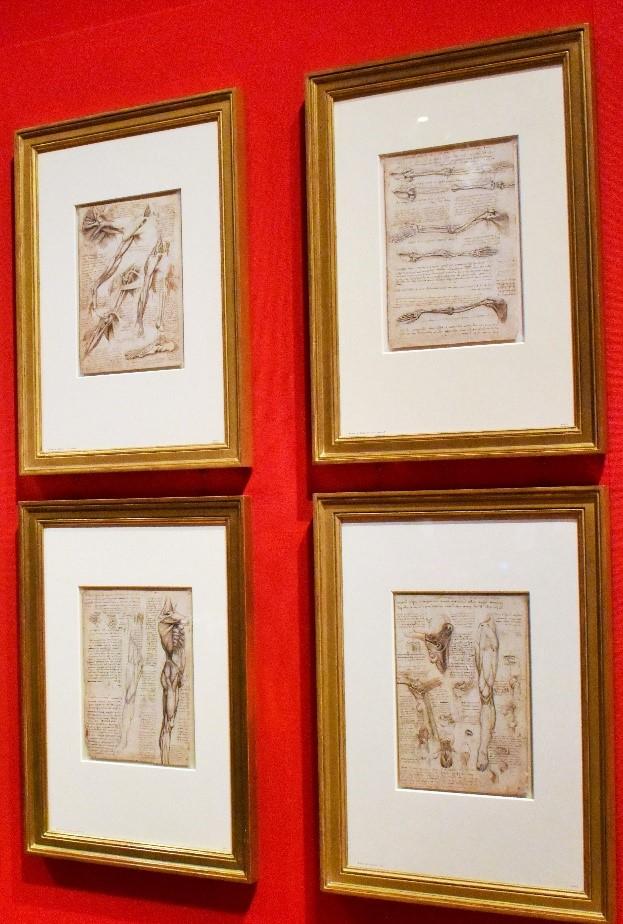 Leonard's anatomical sketches